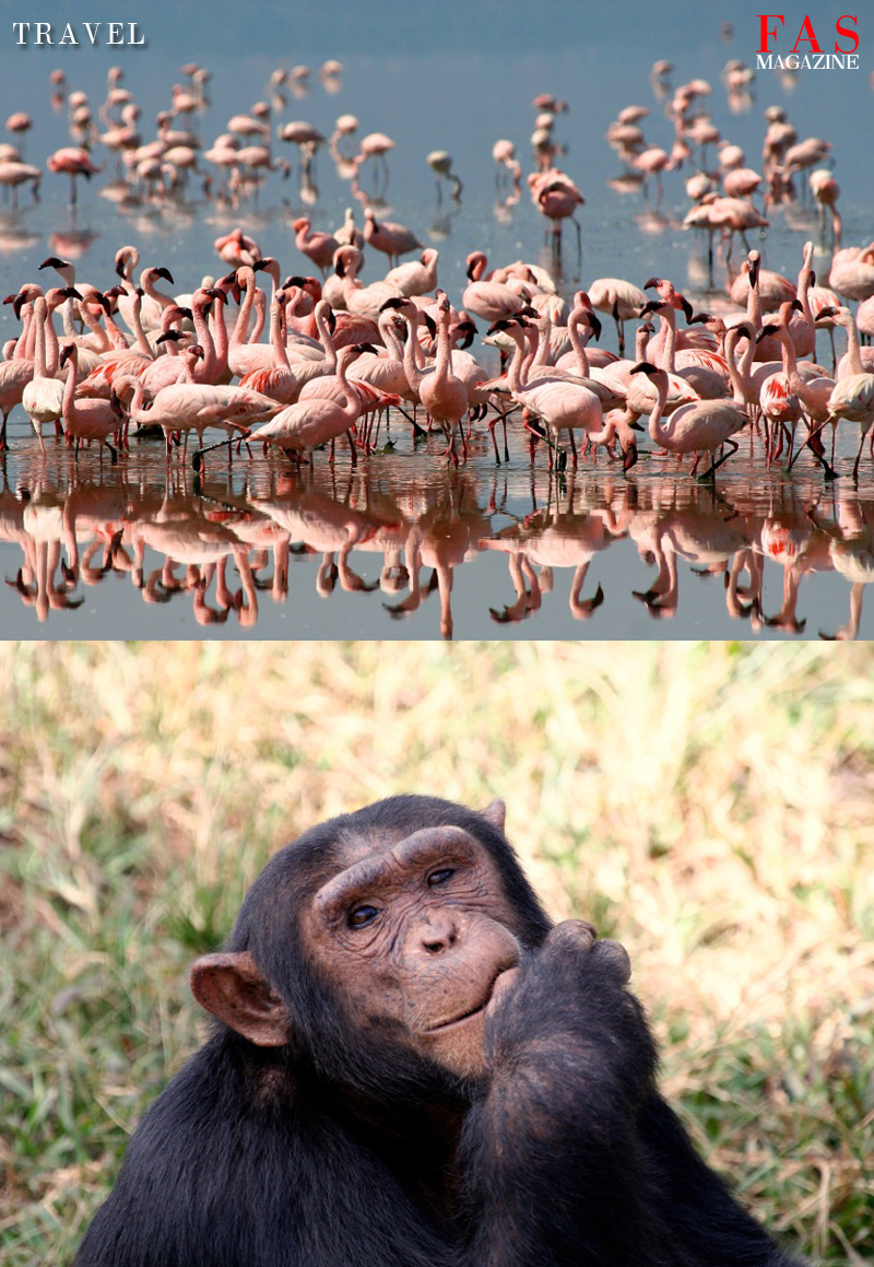 Flamingo's and a baboon in Tanzania national parks. Photographer Moiz Husein.